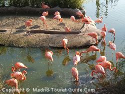 Flamingoes at Faunia Madrid Natural Park